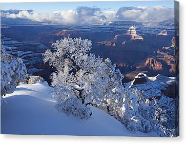 Grand Canyon National Park Canvas Print - Winter Wonder by Mike Buchheit