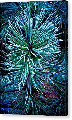 Frozen Pine Needles  Canvas Print