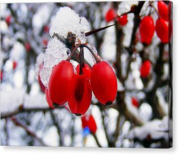 Frozen Red Berries Canvas Print by Ms Judi