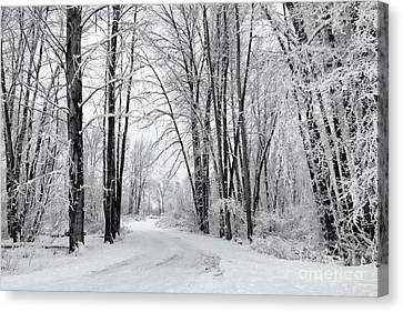 Frozen Road Canvas Print by Mike Dawson