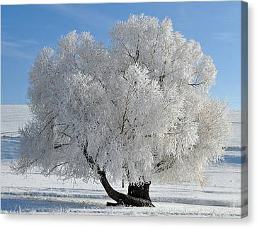 Frozen Tree Canvas Print by Bruce Gourley