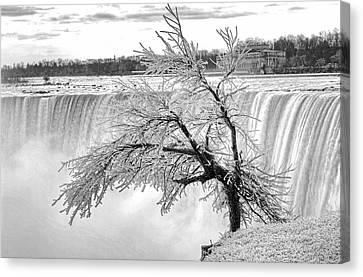 Frozen Tree Near Niagara Falls Canvas Print