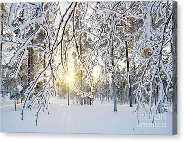 Canvas Print featuring the photograph Frozen Trees by Delphimages Photo Creations