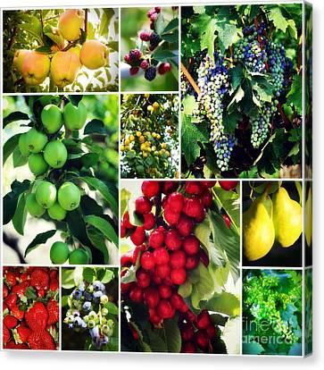 Fruit Collage Canvas Print