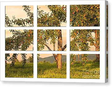 Fruit In The Orchard Through The Window Pane Canvas Print by Mary Lou Chmura
