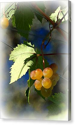 Fruit Of The Vine Vignetted Canvas Print by Suzanne Gaff