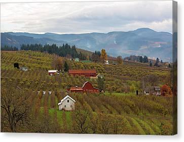 Canvas Print - Fruit Orchard Farmland In Hood River Oregon by David Gn
