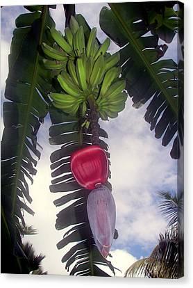 Fruitful Beauty Canvas Print by Karen Wiles