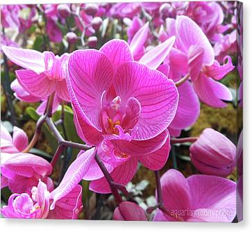 Fuchsia Flower Field Canvas Print