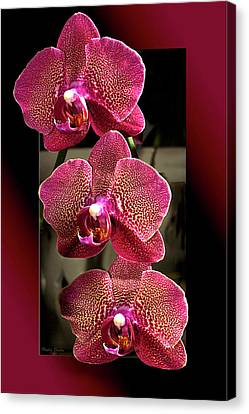 Fuchsia Orchids Oof Canvas Print by Phyllis Denton