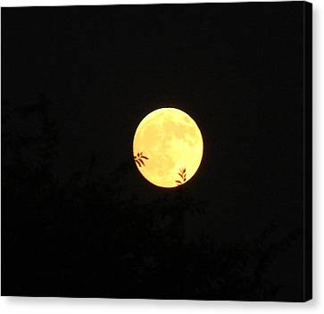 Full Moon August 2008 Canvas Print