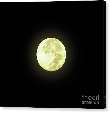 Full Moon August 2014 Canvas Print by D Hackett