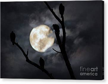 Full Moon Committee Canvas Print by Darren Fisher