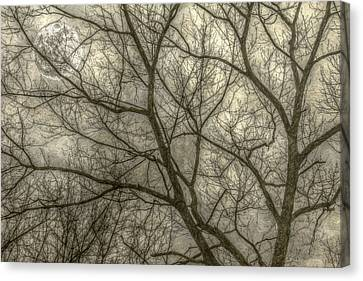 Full Moon In Spring Trees Yellow Canvas Print by Randy Steele