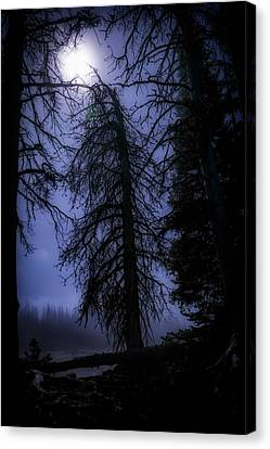Full Moon In The Woods Canvas Print by Cat Connor
