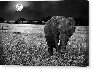 Full Moon Night Canvas Print by Charuhas Images