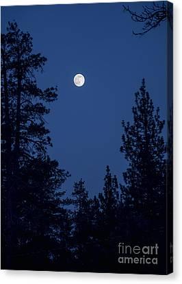 Full Moon Rising Canvas Print