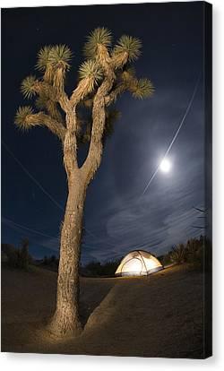 Full Moon Rising Over A Joshua Tree Canvas Print by Rich Reid
