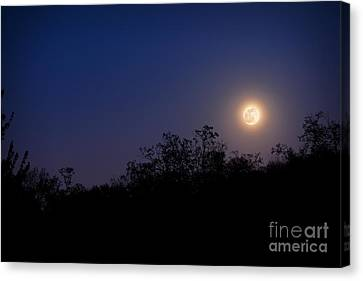 Full Moon Rising Over Trees Canvas Print by Sharon Dominick