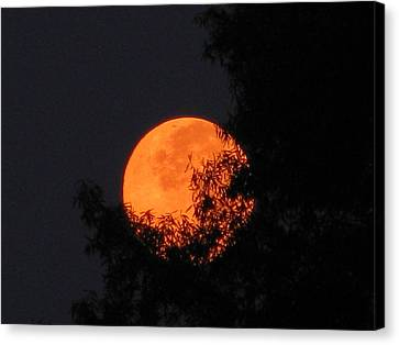 Full Moon Setting Canvas Print by Charles Shedd