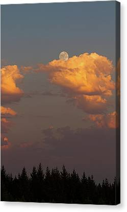 Full Moonrise Over Tree Silhouette Canvas Print by David Gn