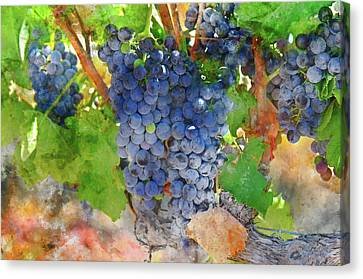 Full Red Grapes On The Vine Canvas Print