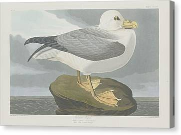 Seagull Canvas Print - Fulmer Petrel by Dreyer Wildlife Print Collections