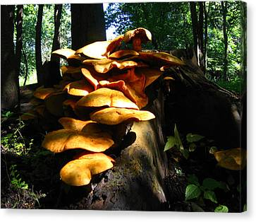 Canvas Print featuring the photograph Fungus Colony 23 by Maciek Froncisz