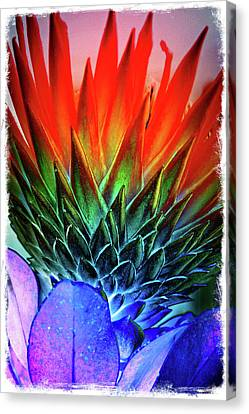 Funky Protea Canvas Print