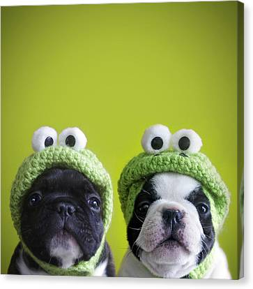 Bulldogs Canvas Print - Funny Dogs by Retales Botijero