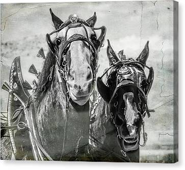 Canvas Print featuring the photograph Funny Draft Horses by Mary Hone