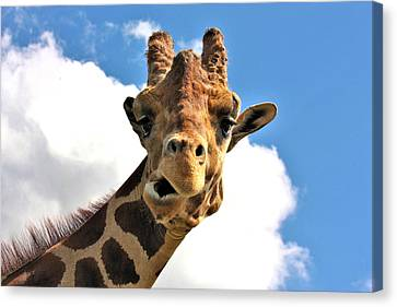 Funny Face Giraffe Canvas Print