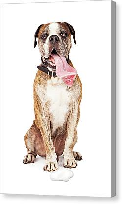 Funny Thirsty Hot Dog Drooling Canvas Print by Susan Schmitz