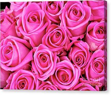 Fuschia Colored Roses Canvas Print