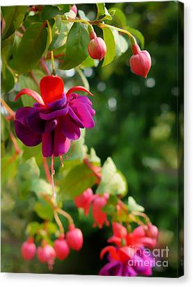 Fuschia Canvas Print by Jeff Breiman