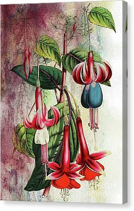 Fuschia Canvas Print - Fuschia by Tammera Malicki-Wong