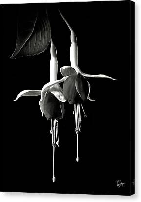 Fuschias In Black And White Canvas Print by Endre Balogh