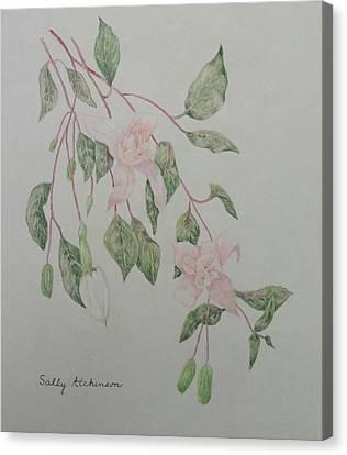 Fushia Canvas Print by Sally Atchinson
