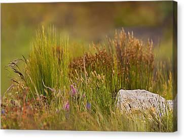 Fynbos Reeds Canvas Print by Basie Van Zyl