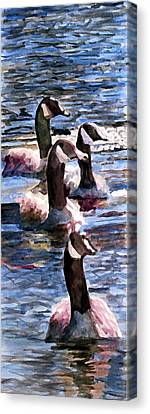 Canvas Print featuring the painting Gaggle Of Geese by Jim Phillips