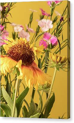 Gaillardia And Dianthus Canvas Print by Richard Rizzo