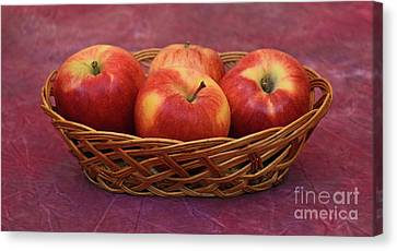 Gala Apple Basket Canvas Print