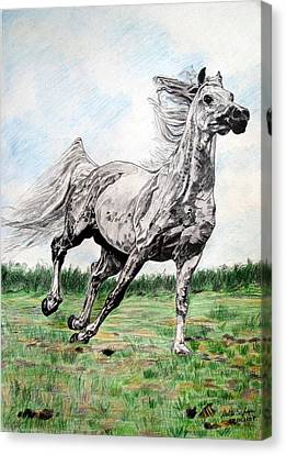 Canvas Print featuring the drawing Galloping Arab Horse by Melita Safran
