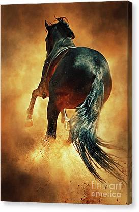 Dimitar Hristov Canvas Print - Galloping Horse In Fire Dust by Dimitar Hristov