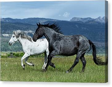 Galloping Through The Scenery Canvas Print
