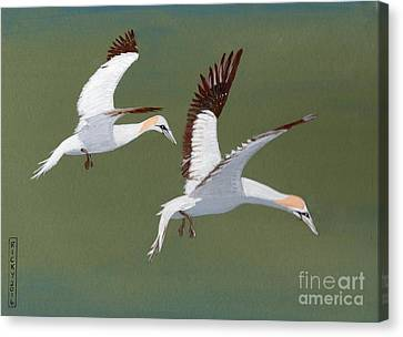 Gannets - Painting Canvas Print by Veronica Rickard