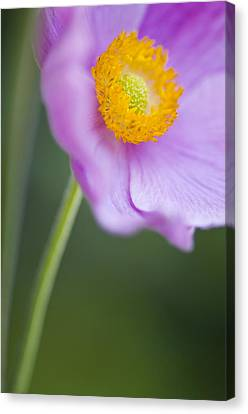 Garden Beauty Canvas Print