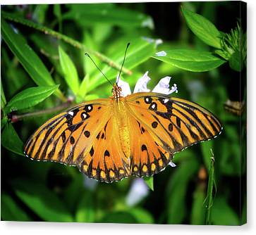 Garden Butterfly Canvas Print by Mark Andrew Thomas