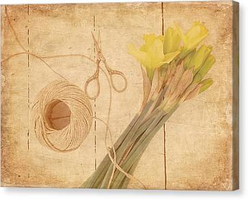 Garden Clippings - Daffodils Canvas Print