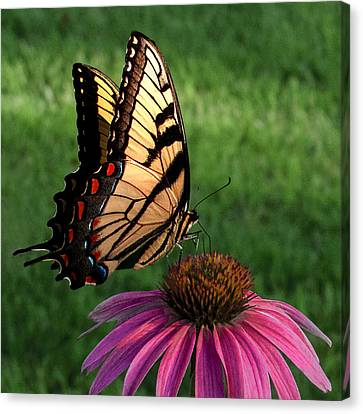 Garden Dancer Canvas Print by Don Spenner